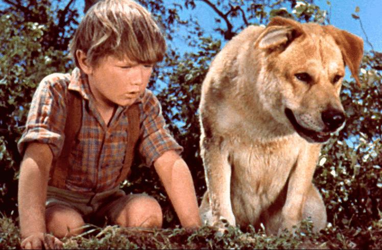 Este sitio te advierte si un perro muere en una película 2