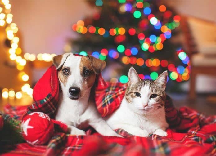 Fotografía de Mascotas (Canon)