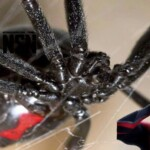 Niños, Araña, Spider-Man, Spiderman, Black widow, Viuda Negra