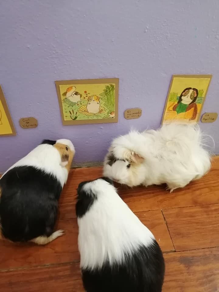 Exposición temporal Cui 20: una usuaria de Facebook recrea pinturas icónicas para sus cuyos 10