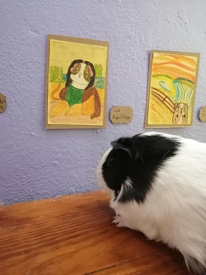 Exposición temporal Cui 20: una usuaria de Facebook recrea pinturas icónicas para sus cuyos 9