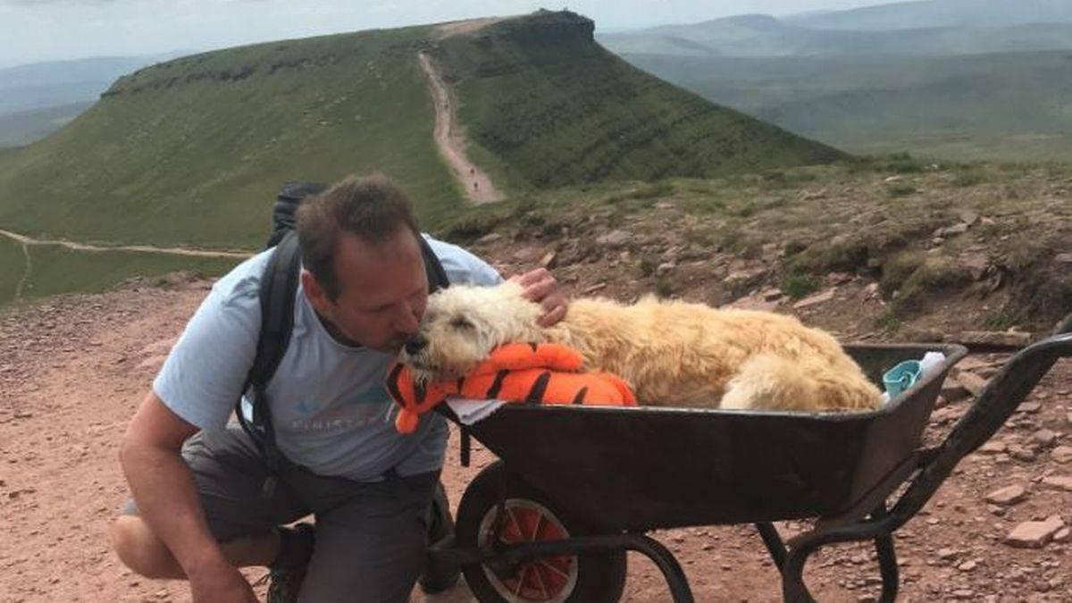 Perrito, montaña